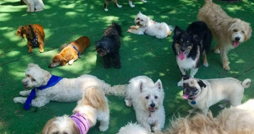 Yale St Dog House – A Loving & Caring Place for your Small Breed Dogs.