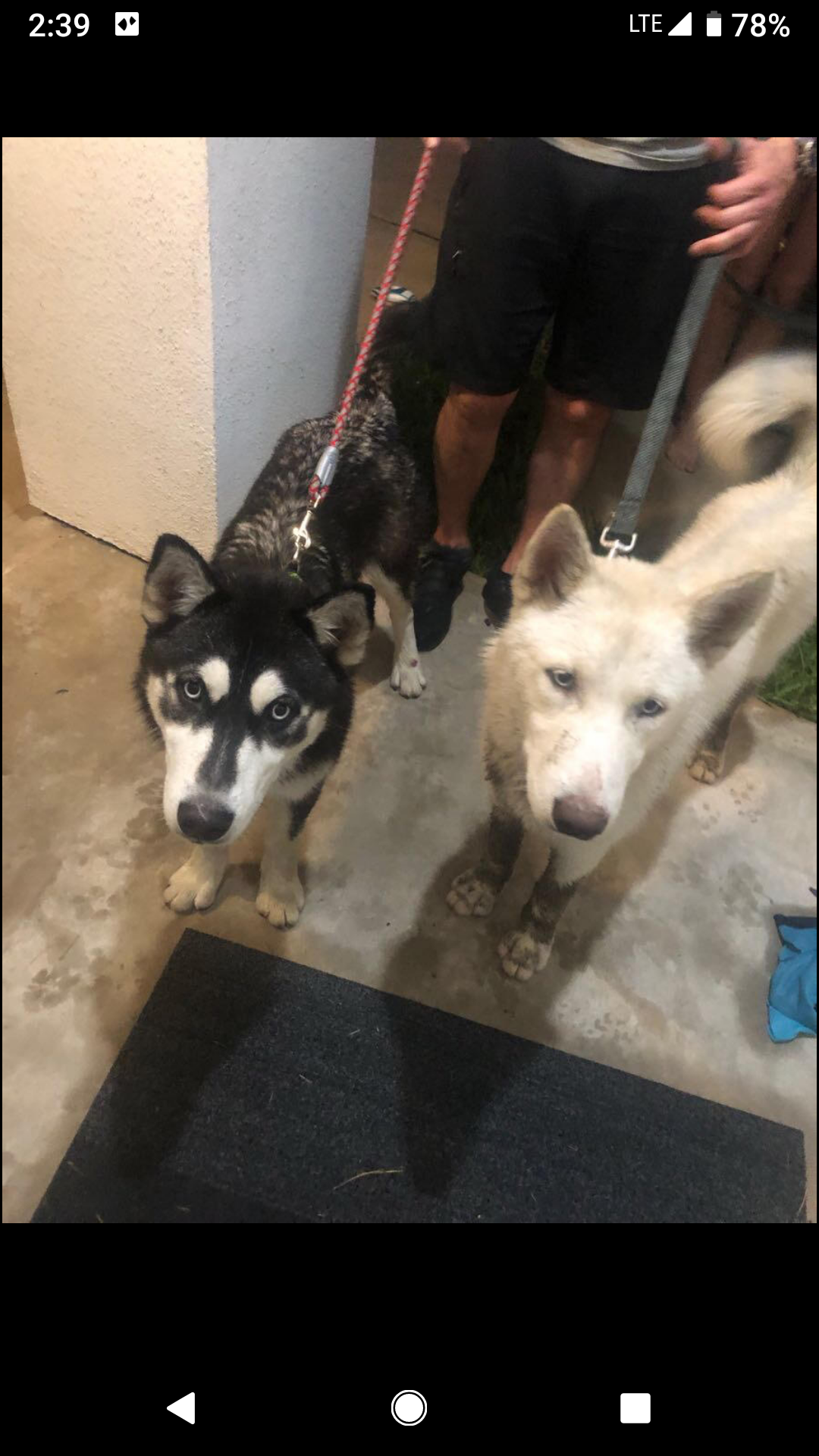 Lost dogs in Houston Heights 😪😪